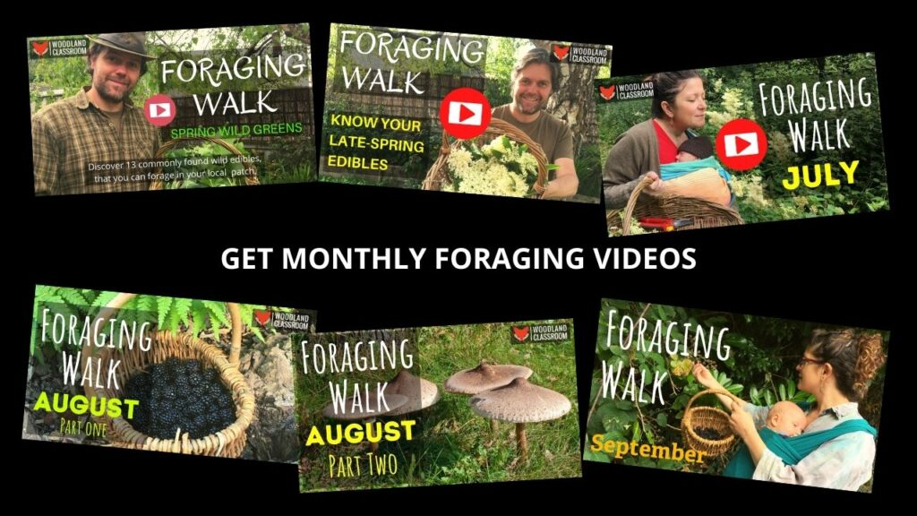 get access to exclusive foraging videos