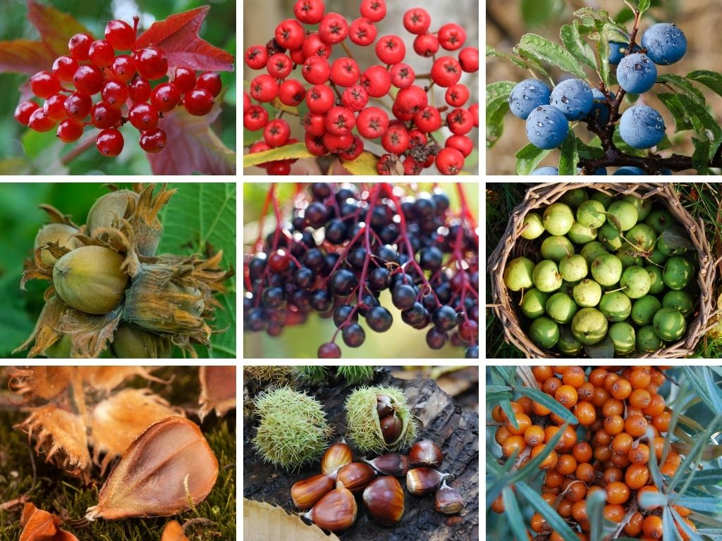 ten trees you can eat - wild food & foraging